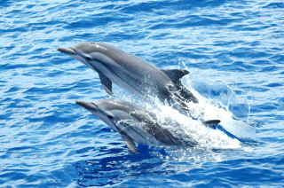 dolphin and whale watching Mediterranean France