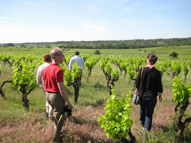 Pezenas is surrounded by vineyards